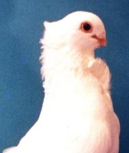 bird059_1